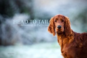 Head to Tail